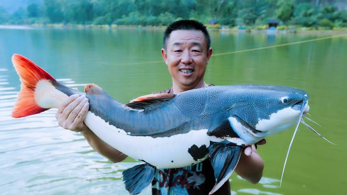 大毛哥的红尾鲶也不小,我真的特别喜欢这种鱼,太漂亮了,简直是鱼中