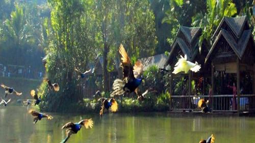 40元∕人) 原始森林公园是国内北回归线以南保存最好的热带沟谷雨林