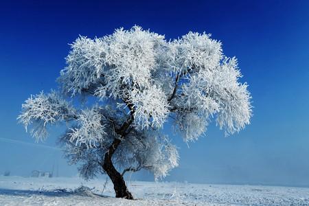 <雪乡-吉林雾凇岛3日游>哈尔滨起止, 雪地摩托登山 冰雪画廊穿越 梦幻家园 二人转  雾凇岛