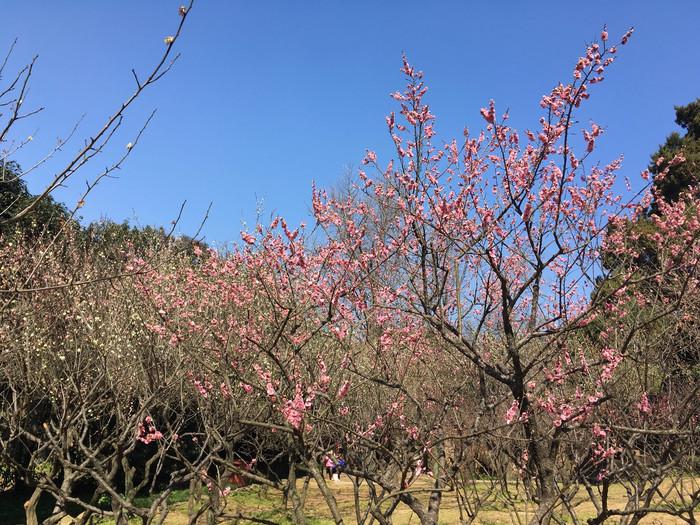 梅花,引领无锡的春天【多图】_梅园游记_途牛