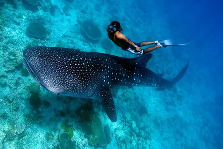<菲律宾杜马盖地机票+当地4晚5日游>安排浮潜观海龟和鲸鲨畅泳,可选锡基霍尔,和海豚追踪,香港往返
