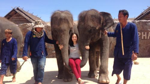 精彩有趣的动物表演,笑声连连,欢乐多多!