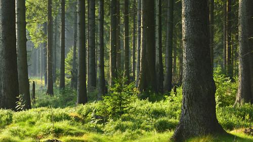 长白山北坡-森林营地-朝鲜6日游>野外bbq,森林采摘,野外漂流,长白山图片