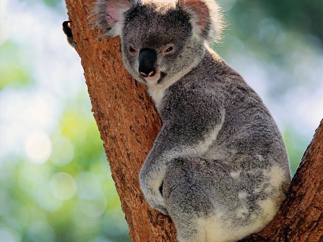 悉尼野生动物世界