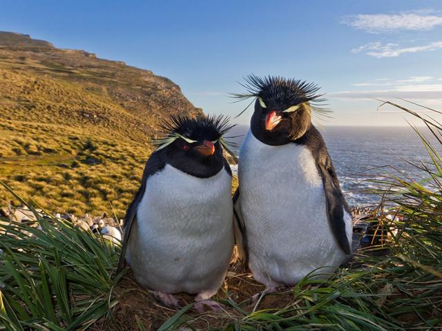 为一处天然动物保护区,珍禽异兽和怪石相映成趣,这里也是小企鹅的栖息