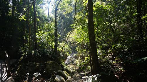 昆明起止 原始森林徒步穿越之旅图片