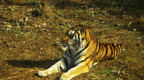 上海野生动物园1日游>奇幻探险