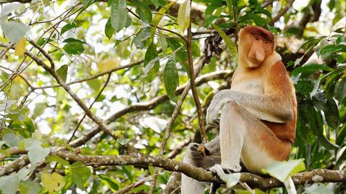 �L鼻�e猴保�o�^