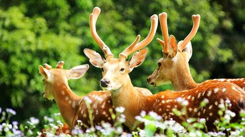 广州长隆动物世界-欢乐世界-水上乐园单高单卧4日游>