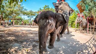 泰国5日游_旅游泰国跟团_泰国旅游几月份最便宜_泰国泰国旅游报价