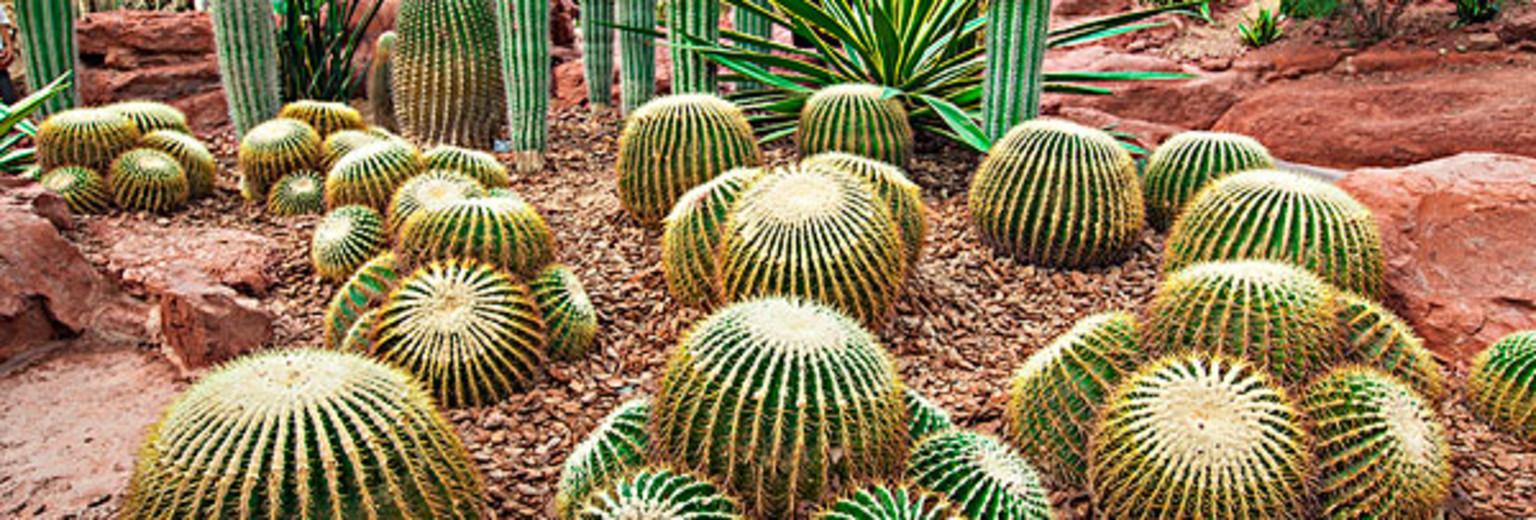 武威旅游景点 民勤沙生植物园旅游攻略  有1张图 新 人 专 享 ¥150