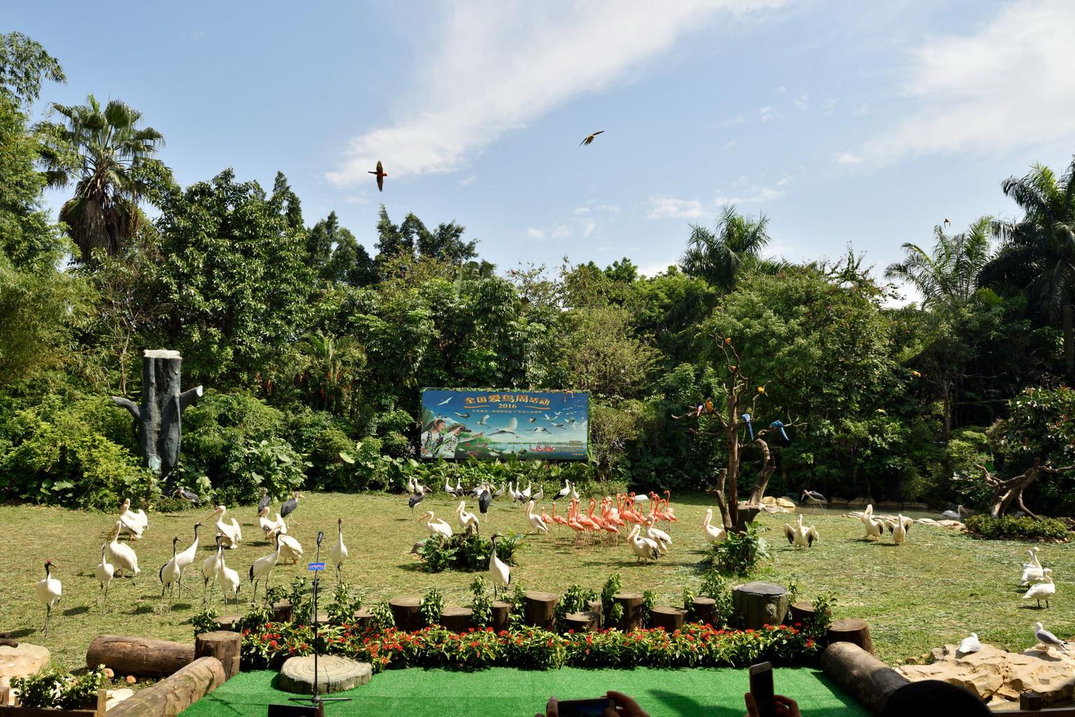 广州长隆野生动物园-欢乐世界-飞鸟乐园5日游>当地跟