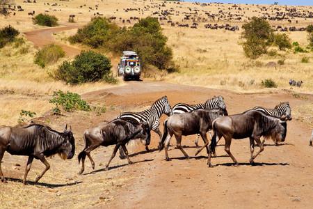 <肯尼亚当地10日游>2人发团、马赛马拉动物大迁徙、统领营地三晚连住、阿布戴尔、纳库鲁湖/纳瓦沙湖、树顶酒店、英文司兼导(当地参团)