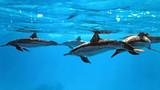 246_斯里兰卡_和鲸鱼海豚打个照面