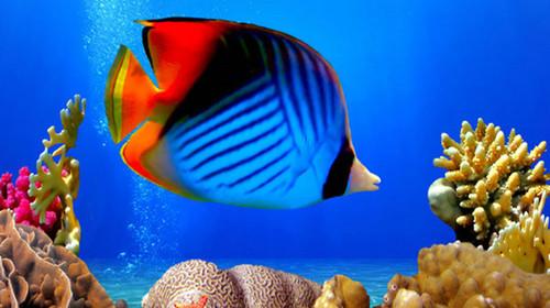 海洋知识2