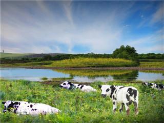 <哈尔滨-呼伦贝尔草原-呼伦湖-额尔古纳湿地-满洲里双飞双卧6日游>0购物、深度游、品尝蒙式早茶、品内蒙烤全羊