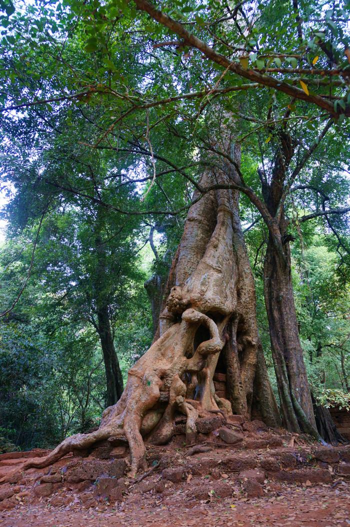 偌大的通王城长满了参天大树.