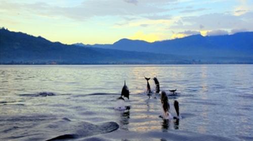 最后我们可爱友善的海豚近距离接触,亲吻海豚,触摸海豚,与海豚共游!