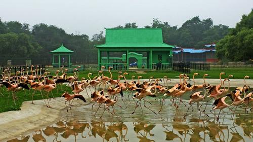 河北北戴河秦皇岛野生动物园自驾2日游>宿北戴河碧园
