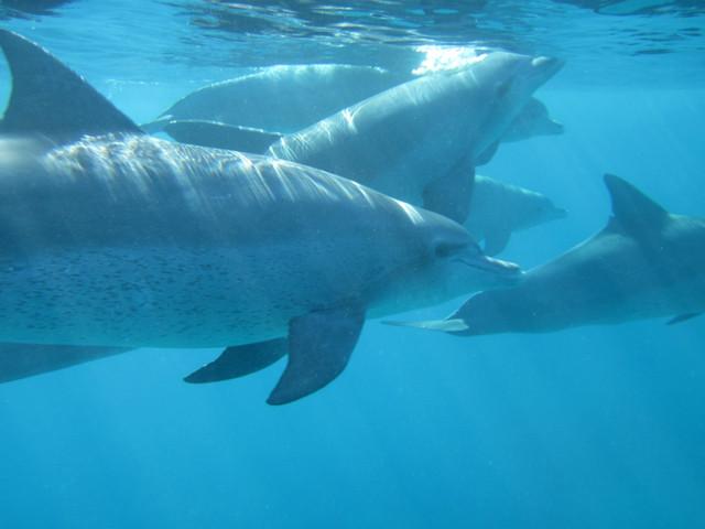 <毛里求斯看海豚+南部四驱车一日游>中文导游,含浮潜设备