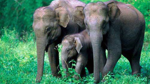 ps素材网 大象