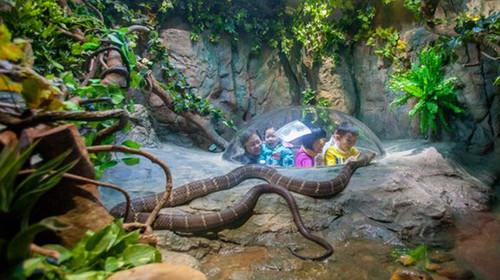等节目取景地:长隆野生动物世界(游览约5小时):广州5a级旅游景区.