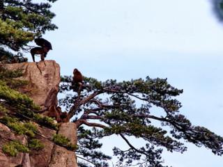 黄山风景区猴