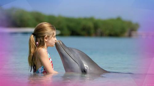 可爱的海豚再加上幽默的驯兽师,两者的表演真是精彩绝伦,让观众笑声连