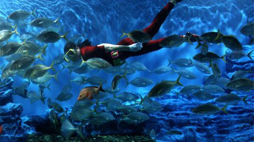 海洋乐园里精彩的海洋动物表演及互动节目,让大人和孩子共度欢乐时光.