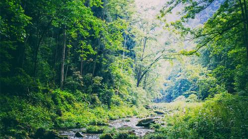 千岛湖中心湖区-森林氧吧度假2日游>门票全含 宿丽景