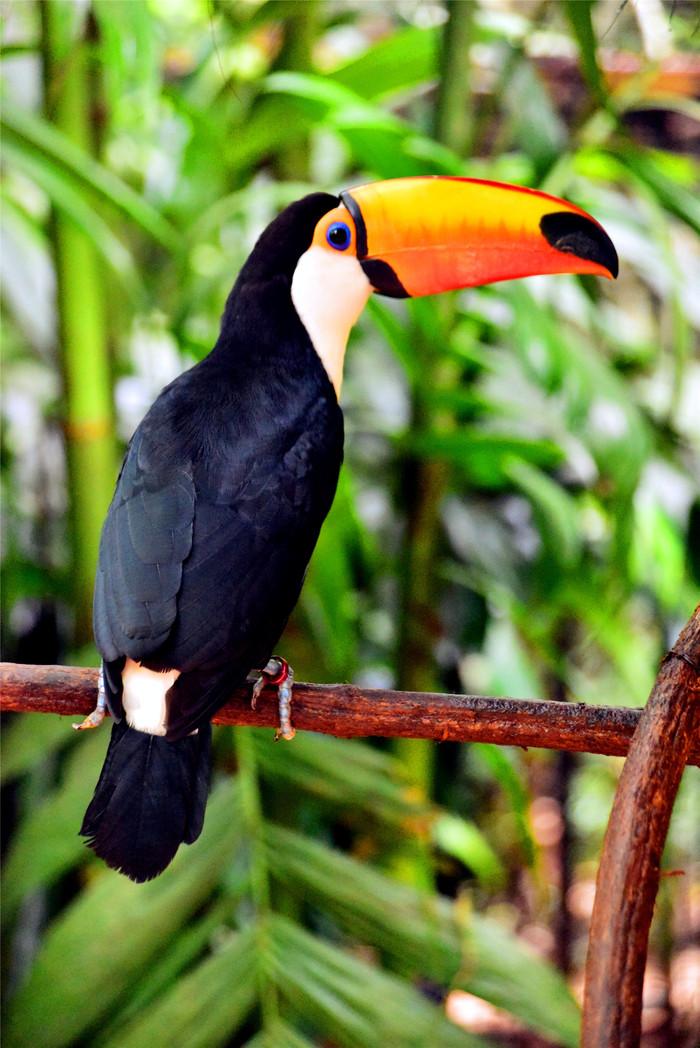 热带雨林中的鸟儿乐园(超过200张珍贵打鸟图)