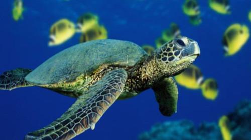 动物海龟几何图