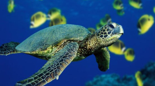 logo海龟作图及步骤