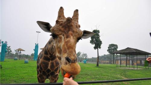 常州淹城野生动物园1日游>周末亲子游