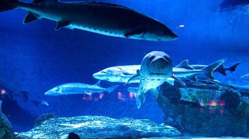 北京海洋馆-北京动物园1日游>含动物园,早出发