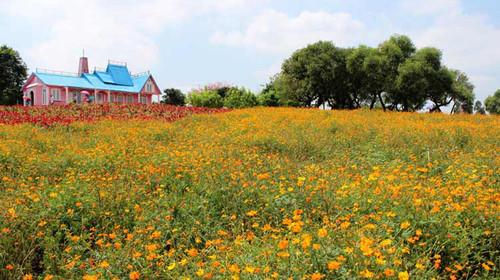 百花绿树风景图片