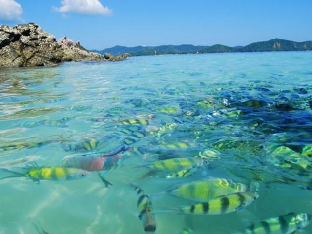 【错峰游】<普吉长岛+蓝钻岛+蛋黄岛一日游>中文导游,赠送浮潜设备