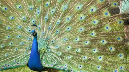 双人报价-南京红山森林动物园自驾2日游>宿南京大观视界酒店1晚