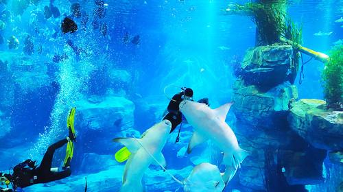 海洋馆的灯光雕塑