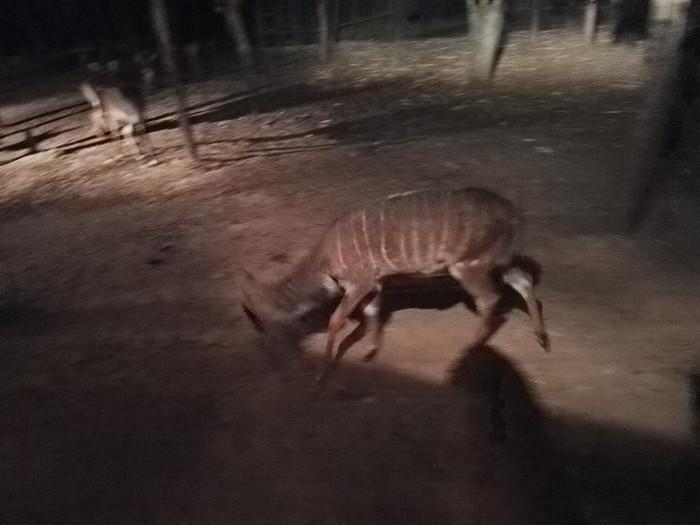 夜间动物园