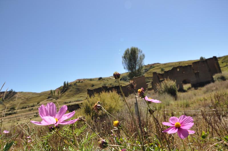 初秋行走在川西藏寨寺廟之間