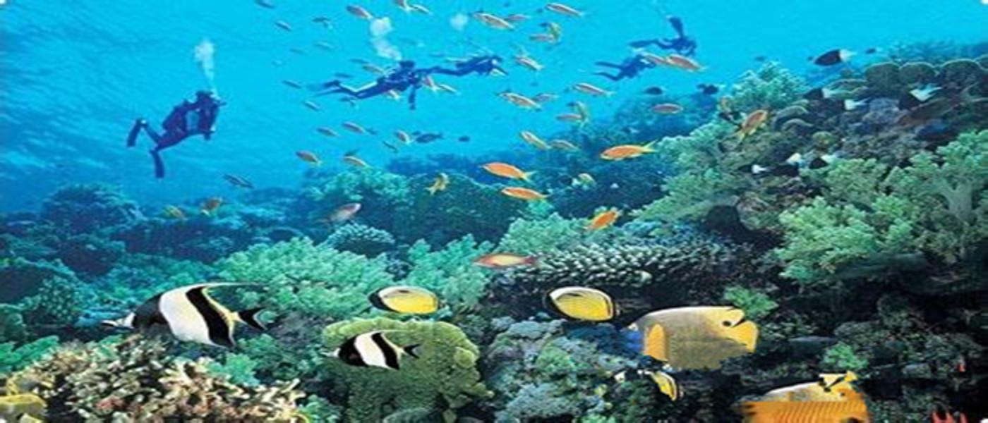 海底风景卡通