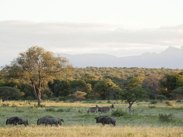 """乘车前往以保护野生动物而闻名于世的""""克鲁格国家野生动物保护公园"""""""