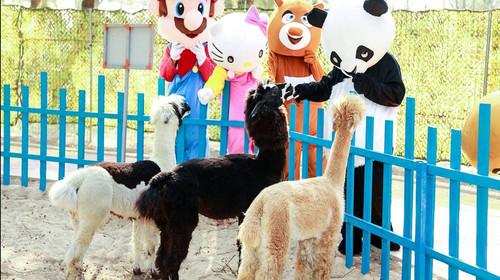 六鳌动物园