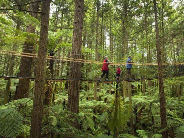 <罗托鲁瓦红木森林高空漫步Treewalk>
