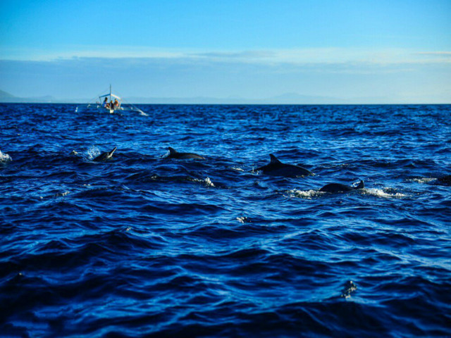 或 自愿自费参加 【薄荷海豚追踪之旅   balicasag海底大断层浮潜