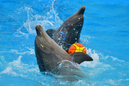 <泰国普吉岛尼莫海豚馆表演门票DolphinsBayNemoPhuket>亲子游可选接送