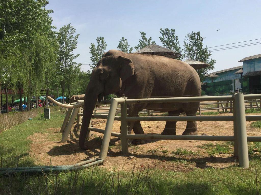 沈阳棋盘山森林动物园1日游>沈阳往返,亲子游玩好去处