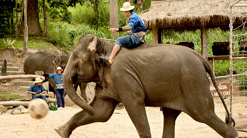 大象被蛇吃了 小王子