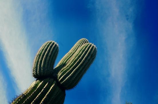 沙漠白鸽之城——与电影里不一样的西部牛仔  【多图】_图森游记